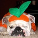 pets-in-costumes-53