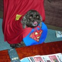 pets-in-costumes-54