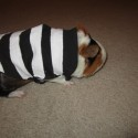 pets-in-costumes-55