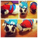 pets-in-costumes-56