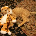 pets-in-costumes-57