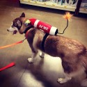 pets-in-costumes-58