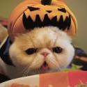 pets-in-costumes-59