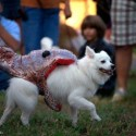 pets-in-costumes-6