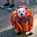 pets-in-costumes-60