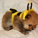 pets-in-costumes-61