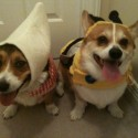 pets-in-costumes-62