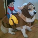 pets-in-costumes-63