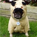 pets-in-costumes-64