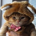 pets-in-costumes-66