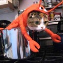 pets-in-costumes-67