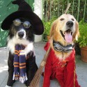 pets-in-costumes-68
