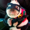 pets-in-costumes-69