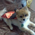 pets-in-costumes-7