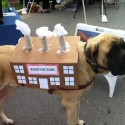 pets-in-costumes-70