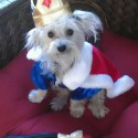 pets-in-costumes-71