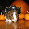 pets-in-costumes-73