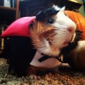 pets-in-costumes-74