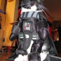 pets-in-costumes-75