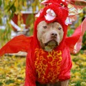 pets-in-costumes-77