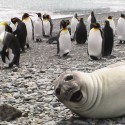 Photobomb-Animals