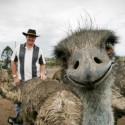 thumbs funny animal photobomb emu