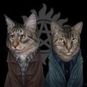 cat-illustration-jenny-parks-16