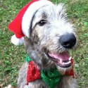 thumbs puppies wearing santa hats 13