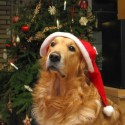 thumbs puppies wearing santa hats 18