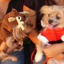 thumbs puppies wearing santa hats 3