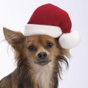 thumbs puppies wearing santa hats 8