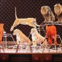 thumbs ringling bros circus 2017 baltimore 5