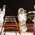 thumbs ringling bros circus 2017 baltimore 7