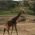 thumbs san diego zoo safari park 3
