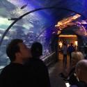 thumbs shark reef aquarium 3