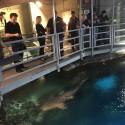 thumbs shark reef aquarium 5