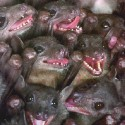 ugly_animals_bats_1422557_l