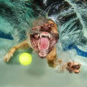 thumbs underwater photos of dogs fetching their balls by seth casteel 1