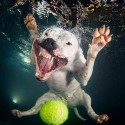 thumbs underwater photos of dogs fetching their balls by seth casteel 10