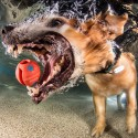 thumbs underwater photos of dogs fetching their balls by seth casteel 2