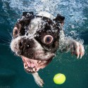 thumbs underwater photos of dogs fetching their balls by seth casteel 3