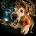 thumbs underwater photos of dogs fetching their balls by seth casteel 4
