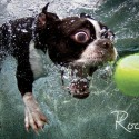 thumbs underwater photos of dogs fetching their balls by seth casteel 5