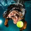 thumbs underwater photos of dogs fetching their balls by seth casteel 6