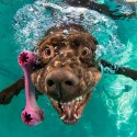 underwater-photos-of-dogs-fetching-their-balls-by-seth-casteel-7