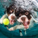thumbs underwater photos of dogs fetching their balls by seth casteel 8