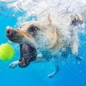 thumbs underwater photos of dogs fetching their balls by seth casteel 9