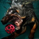 thumbs underwater photos of dogs seth casteel 11
