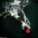thumbs underwater photos of dogs seth casteel 12