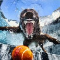 thumbs underwater photos of dogs seth casteel 3